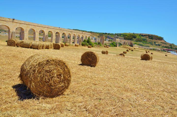 Parliamentary Secretary calls on the EU to aid local farmers