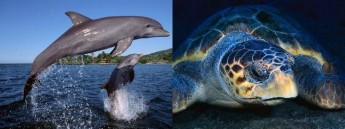 Protecting dolphins & turtles in Maltese waters - Boat-based survey