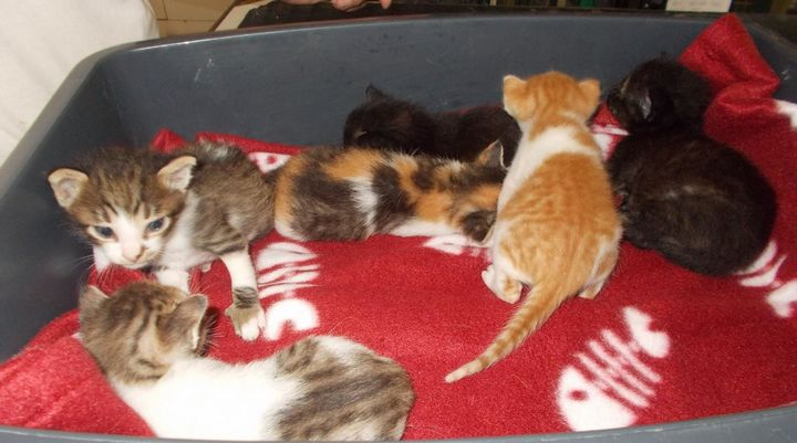 Kittens needing loving and forever homes at Gozo SPCA in Victoria