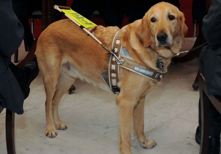 Malta Guide Dogs Foundation appeal for puppy raisers