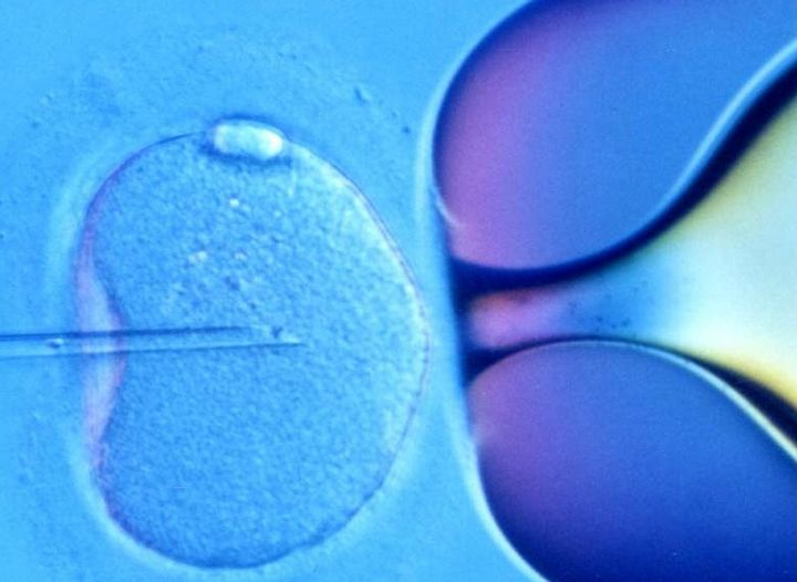 170 couples undergo IVF treatment in Malta up to March this year