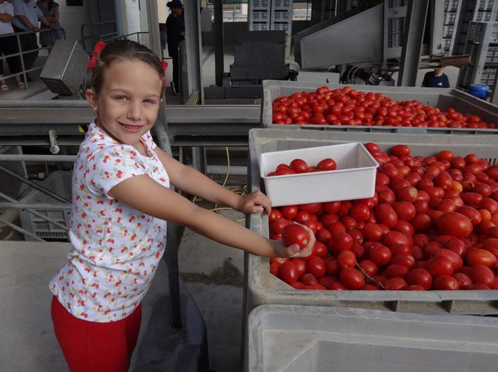 Youngest members of Magro family open the 2014 tomato season