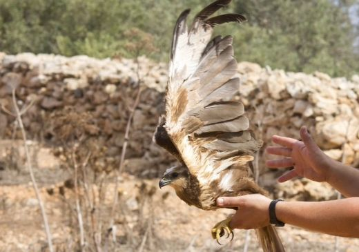15 birds released back into the wild today following rehabilitation