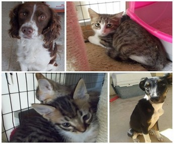 Coxie, Kiwi, Peter and Flossie are all waiting for loving forever homes