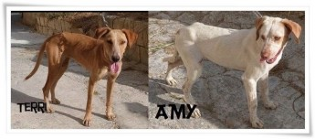 Terri and Amy are 2 friendly female dogs needing forever homes