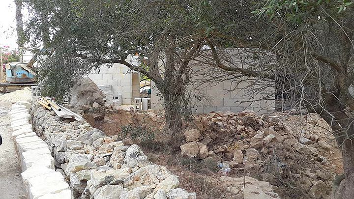 Works get underway on the refubishment of Ta' Blankas olive grove