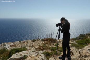 CABS Bird Guards witness 4 protected birds shot down in Malta & Gozo