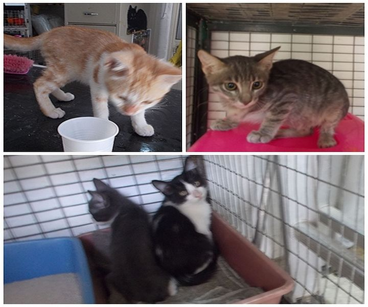 Loving homes need for kittens at the Gozo SPCA Centre