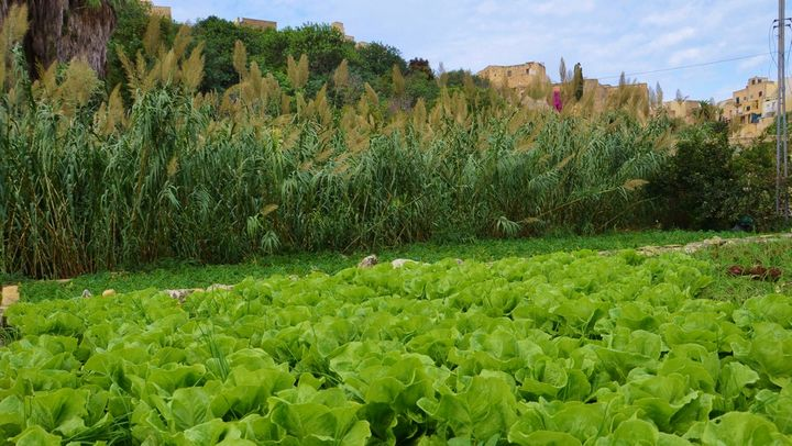 Final agricultural prodution in Malta increased by 1.2% in 2013 - NSO