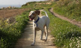 Gozo SPCA need forever homes for 3 loving & friendly dogs - Amy, Fritz and Terri