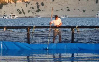 Aquaculture industry gross output increased by €0.5 million in 2013