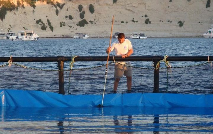 Aquaculture industry total output amounted to €203.9 million in 2017