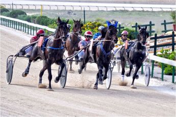 Gozo Horse Racing Association 'November Heats' at the Xhajma track