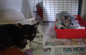 Buster & Bunty, two of the kittens at Gozo SPCA waiting for loving homes