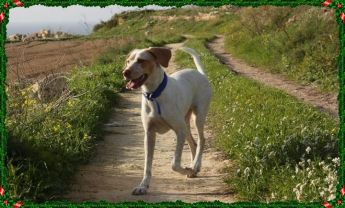 Please help Gozo SPCA find Amy her forever home in time for Christmas