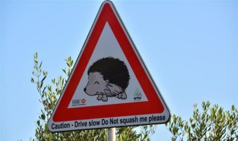 Adopt a Hedgehog Campaign launched across Gozo and Malta