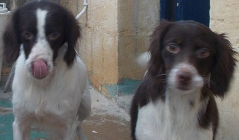 Rocky and Kimba are waiting for their forever homes at Gozo SPCA