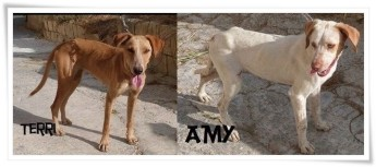 Two loving, friendly, female dogs needing their own forever homes