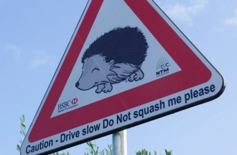 HSBC Malta Foundation to the rescue & rehabilitation of hedgehogs