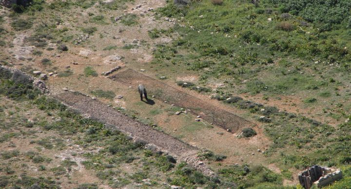 32 illegal finch trapping sites spotted in Gozo, no ALE on the island - CABS