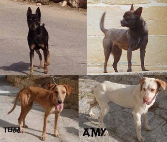 Four friendly, loving dogs, waiting for forever homes at Gozo SPCA