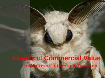 Insects of Commercial Value in Maltese Culture & Tradition - Lecture