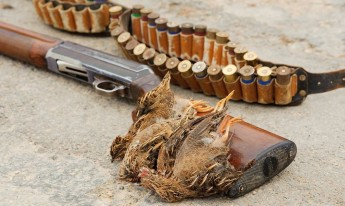 No scientific justification for a spring hunting season insists BirdLife
