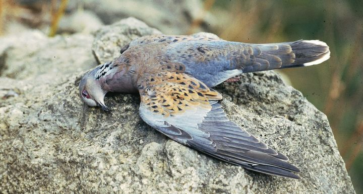 "BirdLife open letter to Prime Minster on ""WBRU's pro hunting approach"""