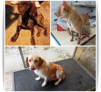 Roy, Goldie & Luna - 3 friendly dogs in need of loving forever homes