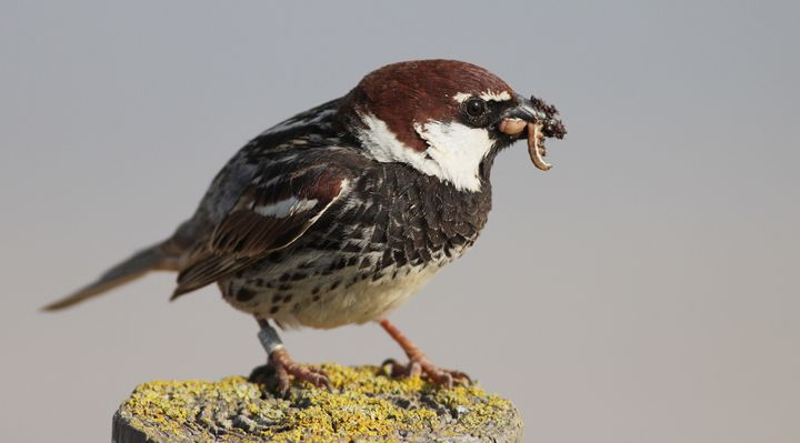 The best thing for most baby sparrows is to leave them alone - BLM