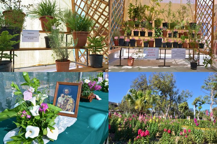 Spring Show of flowers & plants this weekend at Villa Rundle Gardens