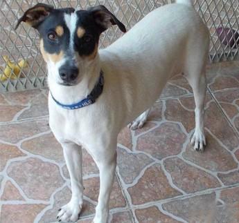 Zelda and Rebel are at Gozo SPCA waiting for loving, forever homes
