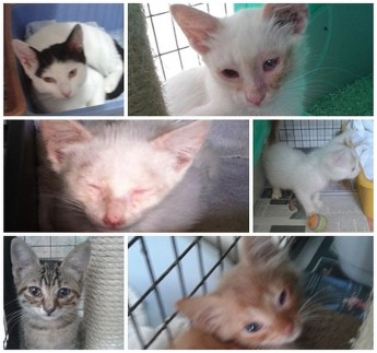 Adorable kittens waiting for loving forever homes at Gozo SPCA