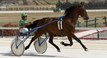 Exciting morning of horse racing in Gozo for the season's final programme