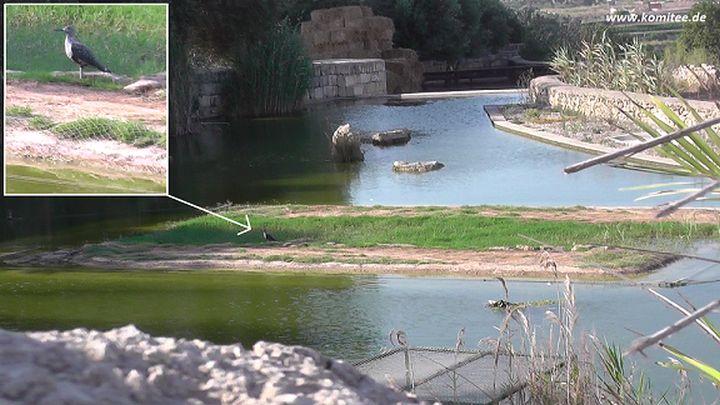 Gozo news com for Artificial pond