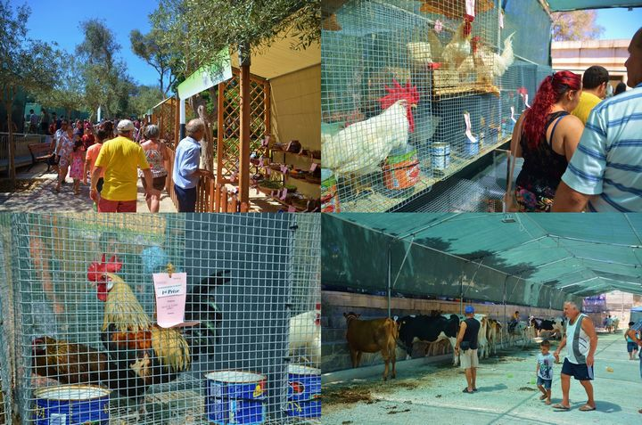160th edition of Il-Wirja ta' Santa Marija agrarian show comes to an end