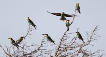 Migration Fest: Celebrating Malta's bird migration at Buskett