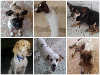 Meet some of the dogs at Gozo SPCA waiting for loving homes