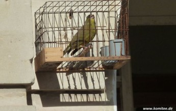 Gozo trapper given record fine of €8000 for illegal bird trapping
