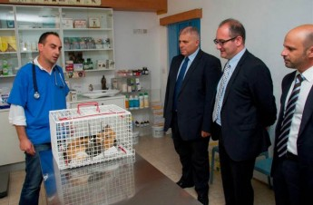 Free Gozo neutering campaign launched for stray dogs and cats