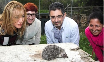 Gozo Councils help hedgehogs by collecting used clothes for recycling