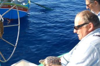 2 Loggerhead Turtles released after treatment & rehabilitation