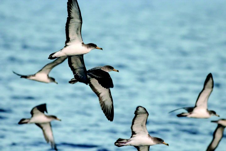 International workshop in Gozo on results of 4-year seabird research