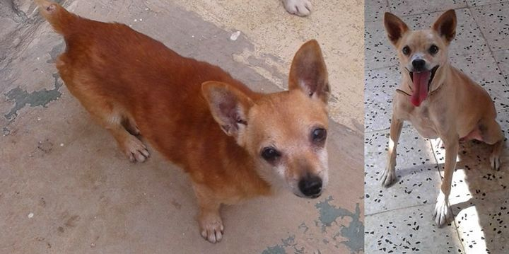 Benny is the 200th animal to be rehomed this year at Gozo SPCA