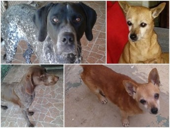 Chuck, Sheila, Chloe & Benny: 4 loving dogs waiting for forever homes