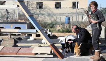 Gozo SPCA is one of 8 organisations to receive Animal Welfare funding