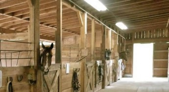 Proposals to tighten up policy for Horse Stables &  Riding facilities