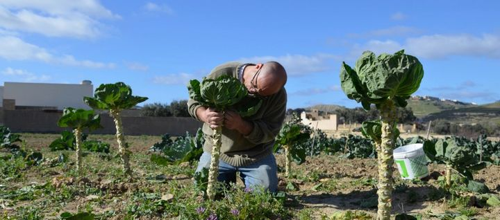 Can natural farming be the future of agriculture in Gozo?