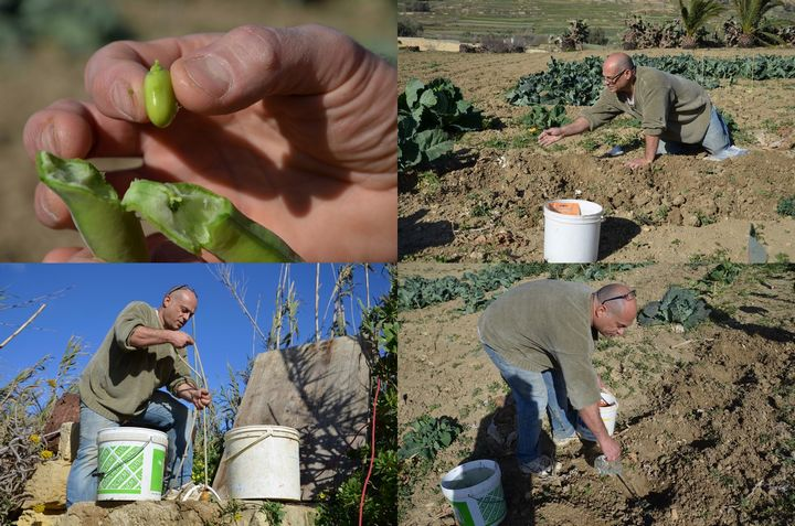 Can natural farming be the future of agriculture in Gozo? - Readers Letter