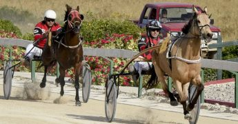 Gozo Horse Racing Association Workers' Day Special Races